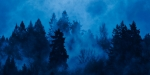 Blue Trees & Fog